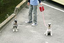 散歩2.PNG