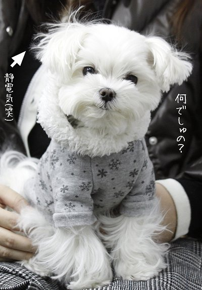 1-15-何でしゅの?.jpg