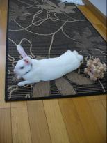 Mimiの絨毯.jpg
