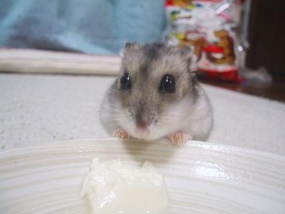 ひま09年3月4日、お豆腐Yummy!!