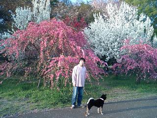 桜をバックにのぶさんとさくら