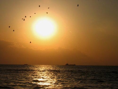房総暮らし(夕陽の中の鳥の群).jpg