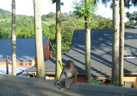 猿のひなたぼっこ.jpg
