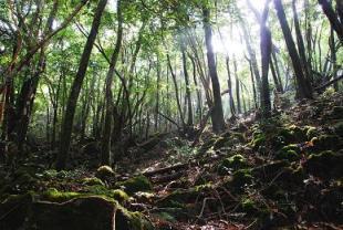 木霊の森の木漏れ日