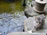 「かつら」庭園・池