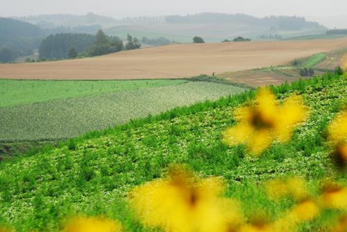 花畑の向こうに広がる風景