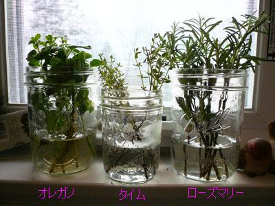herbs_01.jpg