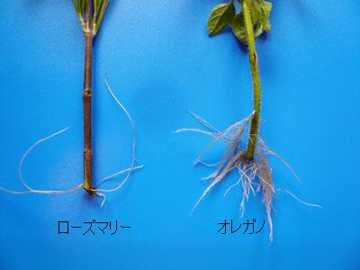 herbs_02.jpg