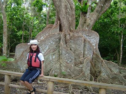 サキシマスオウの木と.JPG