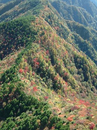稜線の紅葉.jpg