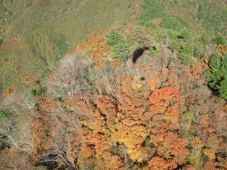 西富士の紅葉.jpg