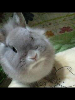 兔[1].JPG