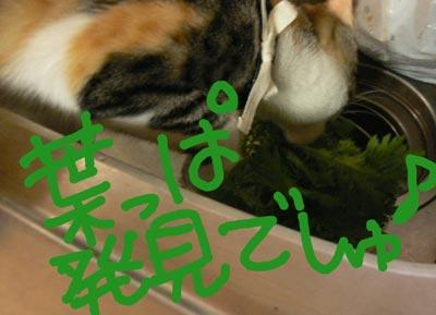 20110308-4.jpg