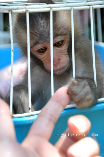 zoo 小さな手
