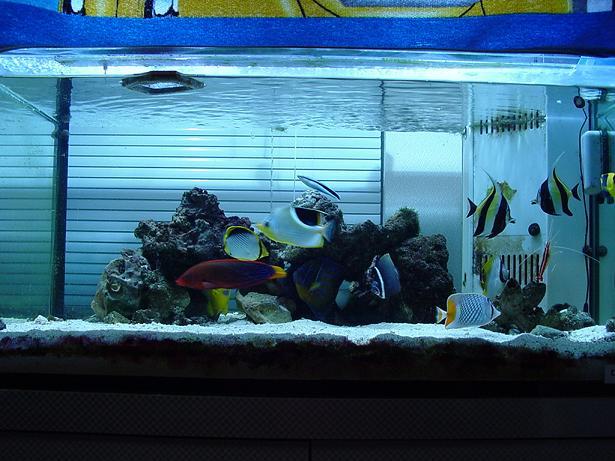 3.7魚水槽