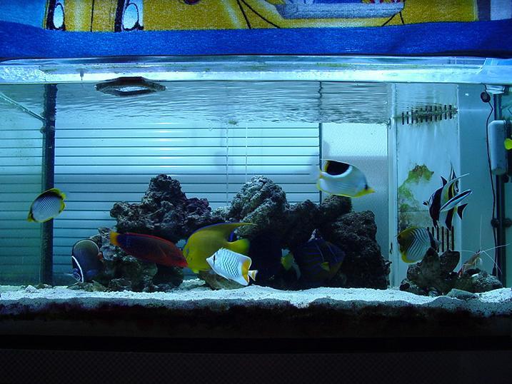 3.7魚水槽1