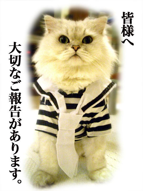 GoaisatufromKoushiro