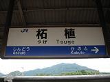 tsuge1.jpg