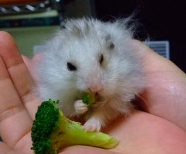 草食系?4