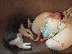 Baby&Cat