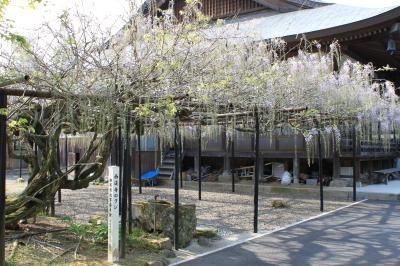 西蓮寺の藤の花は。
