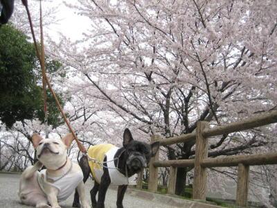2010:桜