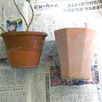 100506プレオメラ植替え -鉢の比較