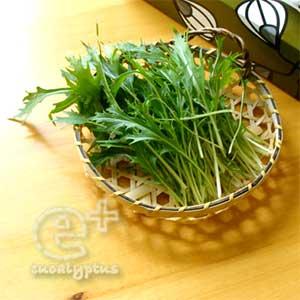 090513水菜の初収穫