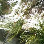 110211 の雪