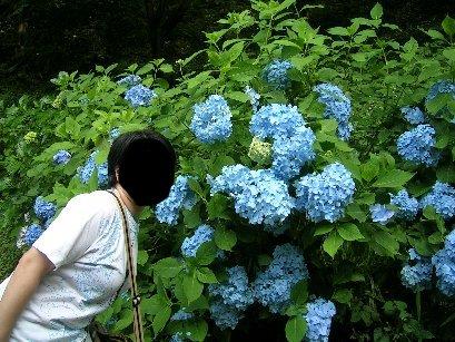 花とハナ☆