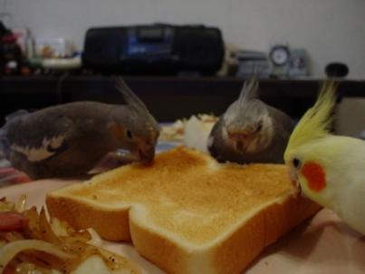 とりとり朝食風景