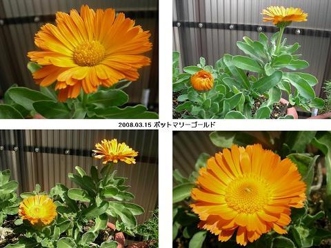 20080315mari-go-rudo.JPG