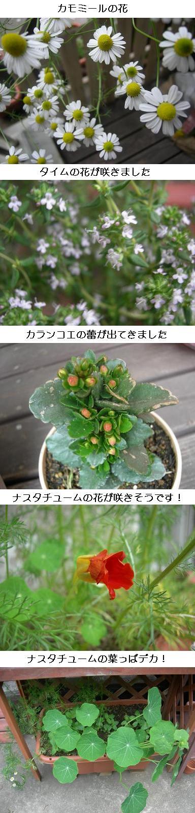 20080504hana.jpg