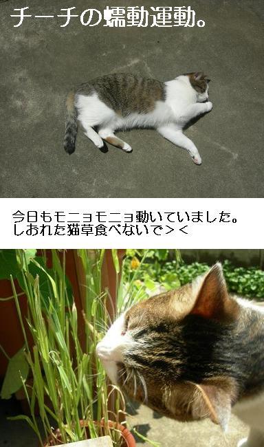 画像 247.jpg