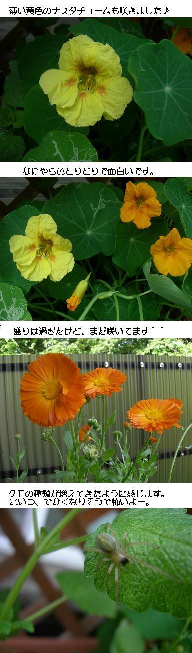 20080521niwa.JPG