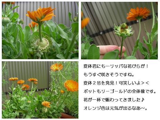 20080420mari-go-rudo.jpg