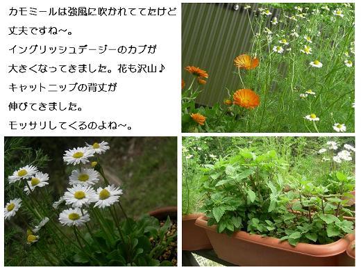 20080420niwa.jpg