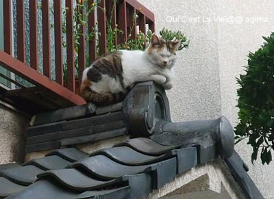 屋根の上の猫それは。