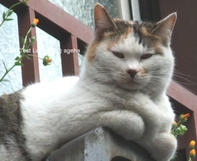 屋根の上の猫それはクロちゃん。