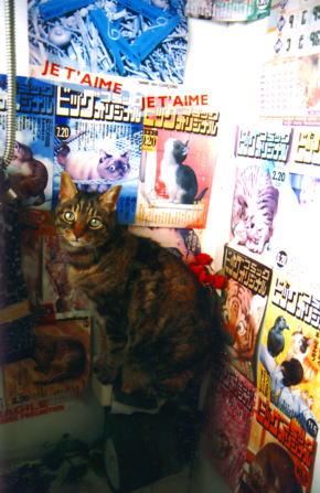 ライブハウス的トイレット&猫。