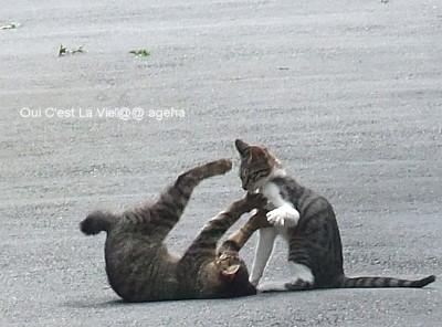 巴投げ!な猫。