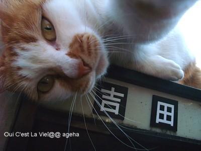 外猫吉田さん。