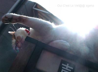 外猫吉田さん猫パンチ2秒前。