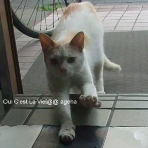 白茶猫伸びる。