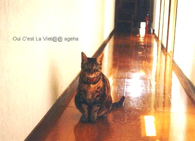 ドアに猫穴。
