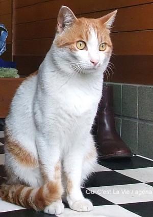 白茶黒猫三兄弟。茶色ちゃん。