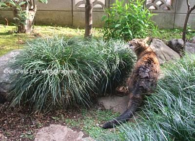 草喰い猫。