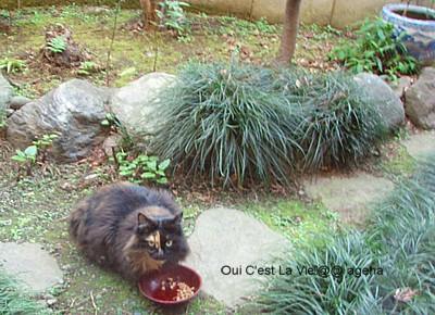 外猫クロちゃん。2009