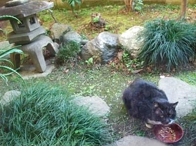 外猫パンダ。
