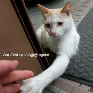 白茶猫パンチ。